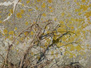 10. Schaduw plant op bemoste muur