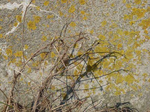 10. Schaduw plant op bemoste muur van Alies werk