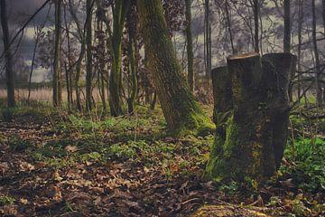 A forest in Drenthe van Elianne van Turennout