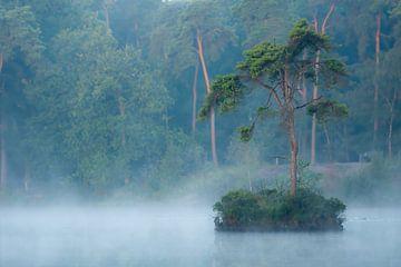 boom in de ochtend mist van eric brouwer