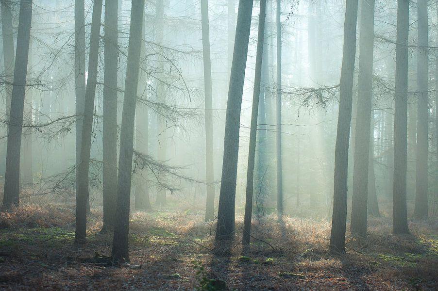 into the light.. van Arjan Keers