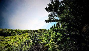 Natuur op TENERIFE    prachtige wildgroei  in helder blauwe lucht van Willy Van de Wiele