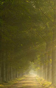 Zonnestralen in de bossen van Gorp en Roovert. van Miranda Rijnen Fotografie