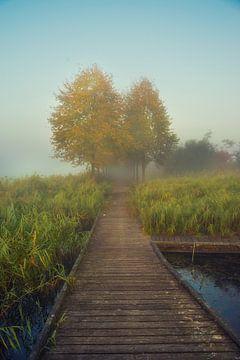 Foggy Trees van Casper De Graaf