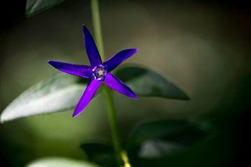 Purple Power Flower van Harald Harms