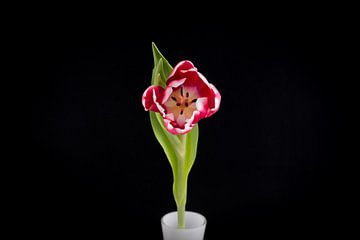 De Tulp van Pascal Raymond Dorland