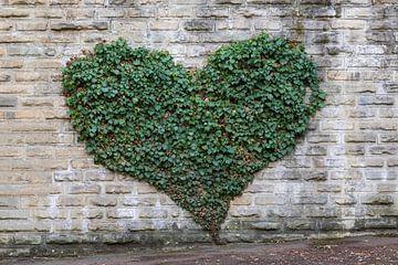 Ivy hart van Werner Dieterich