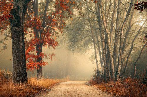 Herfst bos in de mist