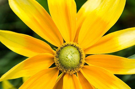 Kleurrijk geel