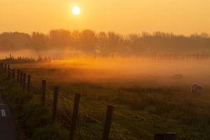 Nebel bei Sonnenaufgang.