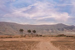 Huisje met palmbomen op Fuerteventura La Olivia
