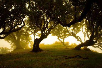 Sonnenlicht, das durch die Bäume auf Madeira am Morgen scheint von jonathan Le Blanc