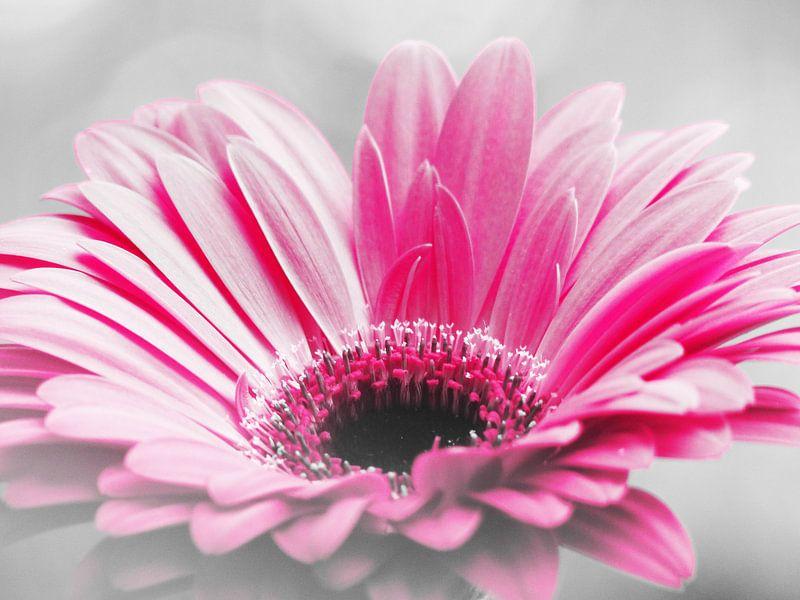 Gerbera Roze van bird bee flower and tree