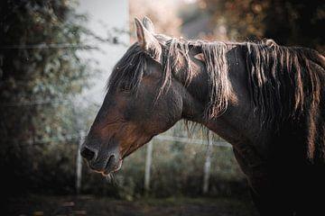 paard portret paard van Thilo Wagner