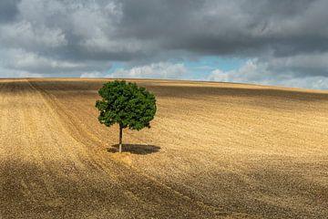 Eenzame boom met schaduw van Daan Kloeg