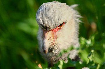 Tropische vogel van Henny Buis