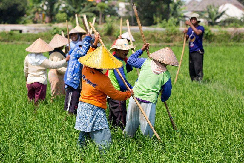 Werken in de rijstvelden op Lombok van Willem Vernes