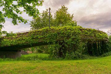 Un pont couvert de feuilles sur Andreas Marquardt