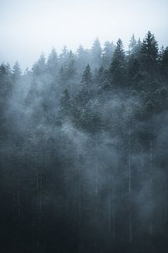 Nebel durch den Wald von Dylan Shu