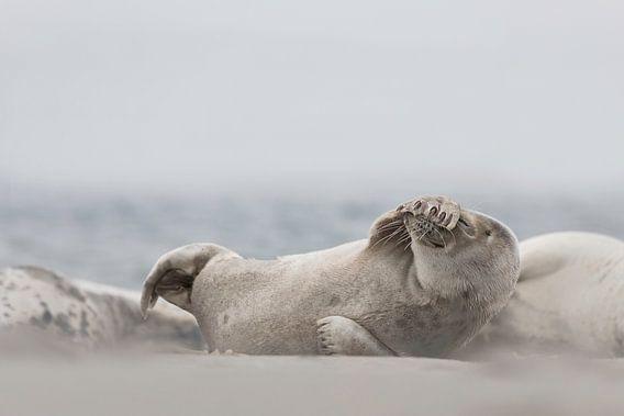 Zeehond van Vandain Fotografie