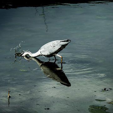 Reiger vangt een vis van Jeroen