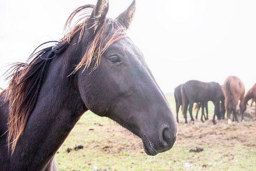 Paarden in de wei van