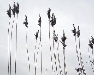 Fahnen im Wind von J..M de Jong-Jansen