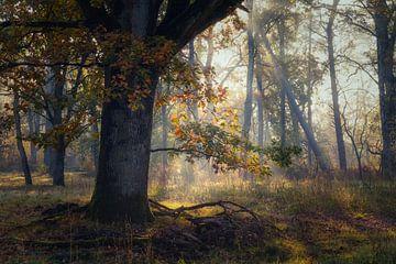 Farben der Eiche von Joris Pannemans - Loris Photography
