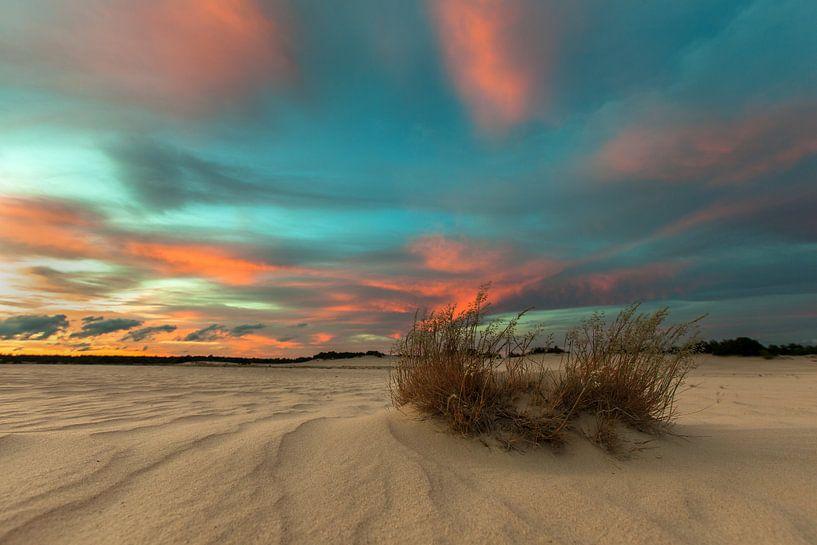 Dutch Desert van Marc Smits