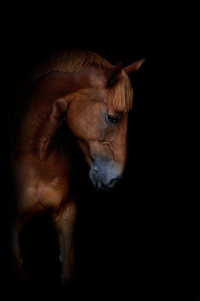 Paard aan de muur 5 van Wybrich Warns