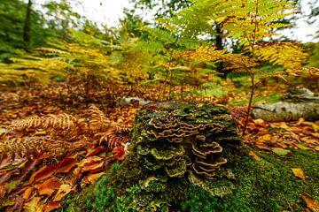 Wald im Herbst von Dirk van Egmond