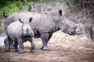 Mother and child - Rhino van