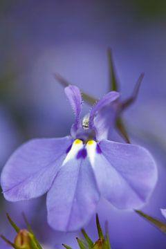 Flower von Erwin Verweij