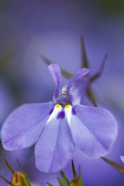 Flower van Erwin Verweij