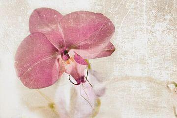 Orchidee bloem in roze van Christine Nöhmeier