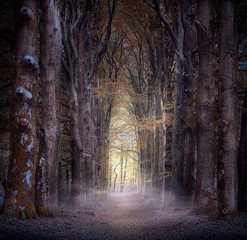 À mi-chemin sur Kees van Dongen