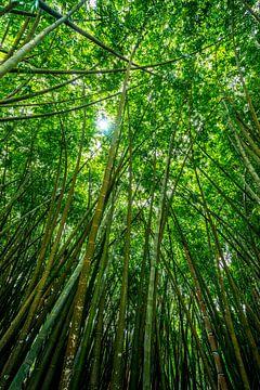 Riesiger Bambuswald mit Sonnenschein von Ruurd Dankloff