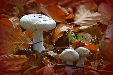 """mug op paddestoel"" / ""mosquito on a mushroom"" van Pascal Engelbarts"