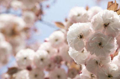 Wollige bloemen op een heerlijke lentedag