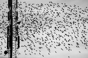 Starschwarm an einem Mast in Schwarz-Weiß von Anne Ponsen