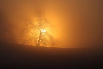 Sonnenaufgang bei Nebel von Jana Behr