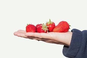 Rijpe rode aarbeien gepresenteerd op een vlakke hand