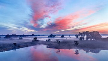 Rode en blauwe hemel tijdens zonsopgang op een mistige wetland_2 van Tony Vingerhoets