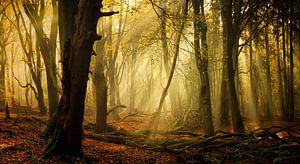Speulderbos in herfst (XXL formaat, ideaal voor behang) van Rigo Meens