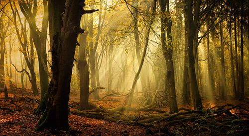 Speulderbos in herfst (XXL formaat, ideaal voor behang)