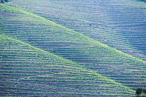 Wijngaarden bij Pinhão, Portugal
