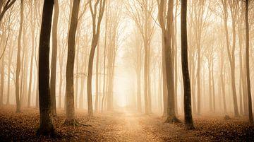 Chemin à travers une forêt de hêtres pendant un matin brumeux sur Sjoerd van der Wal