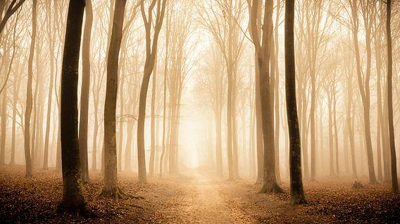 Voetpad door een beukenbos tijdens een mistige ochtend van Sjoerd van der Wal