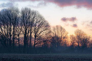 Ein Morgen voller Farben von Tania Perneel