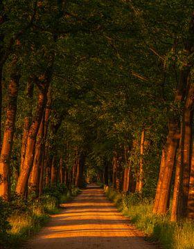 Zomeravond wandeling in het bos. van Michel Knikker